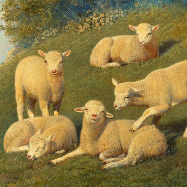 Lambs Perfume Oil