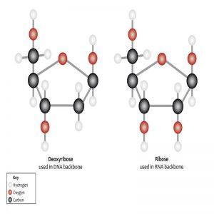 Complex Sugar Perfume Oil