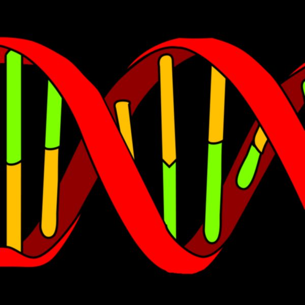 DNA Perfume Oil