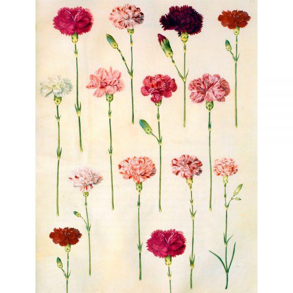 14 Carnations Perfume Oil