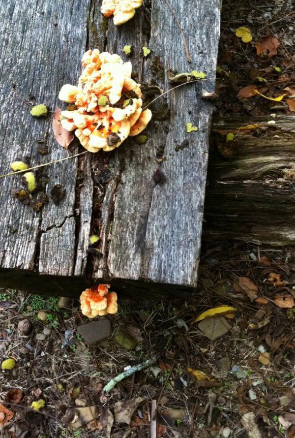 Autumn (Vivaldi) Perfume Oil