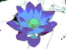 Lotus of the Nile Perfume Oil