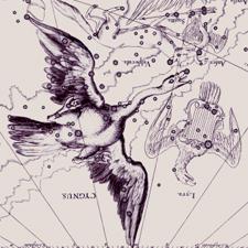 Cygnus the Swan Perfume Oil
