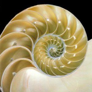 Fibonacci Curve Perfume Oil