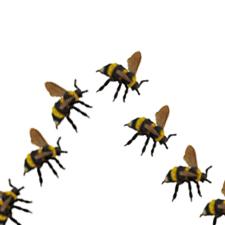 Flight of the Bumblebee (Koraekov) Perfume Oil