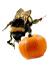 Girls Love Pumpkin THANKSGIVING Perfume Oil