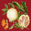 Pomegranate Sorbet Perfume Oil