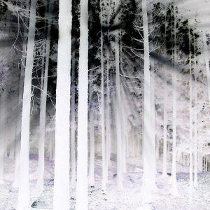 The Dark Woods Perfume Oil