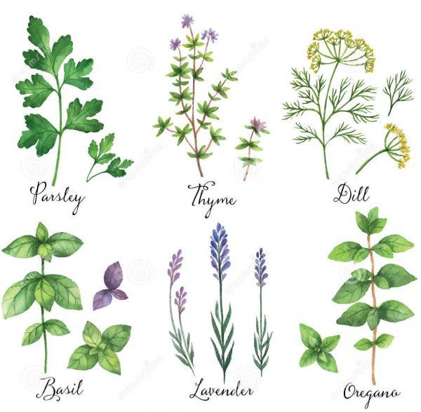 A Cheerfulness of Herbs Perfume Oil